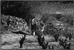 Vente de vins bio au Perreux sur Marne